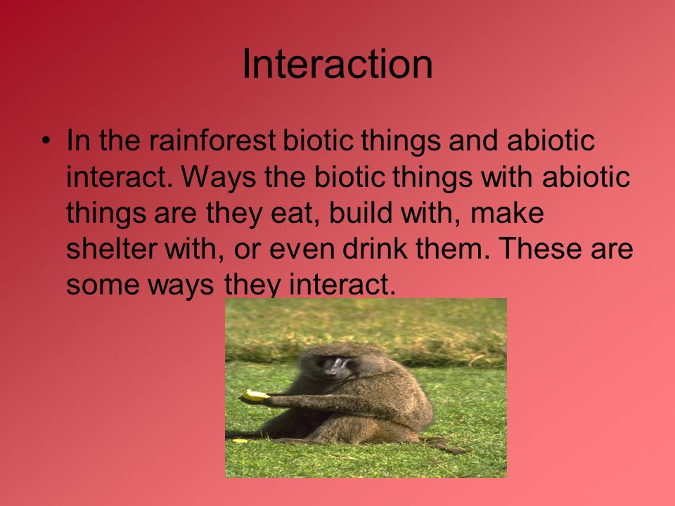 tropical rainforest interactions