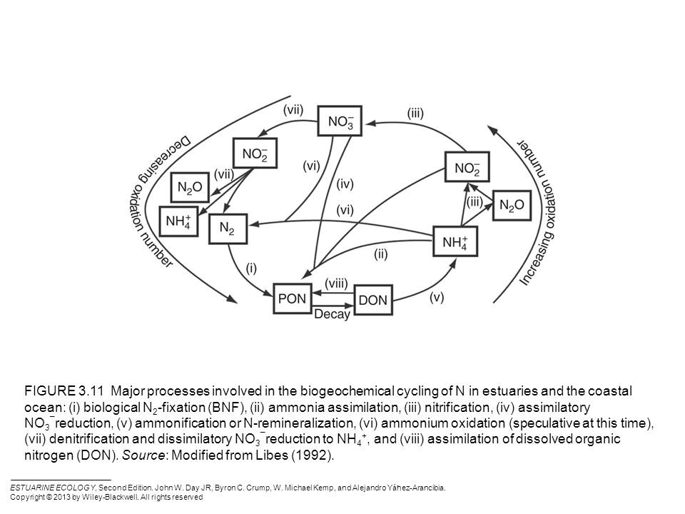 Figure 3 1 Bacterial Decomposition Of Organic Matter In Marine