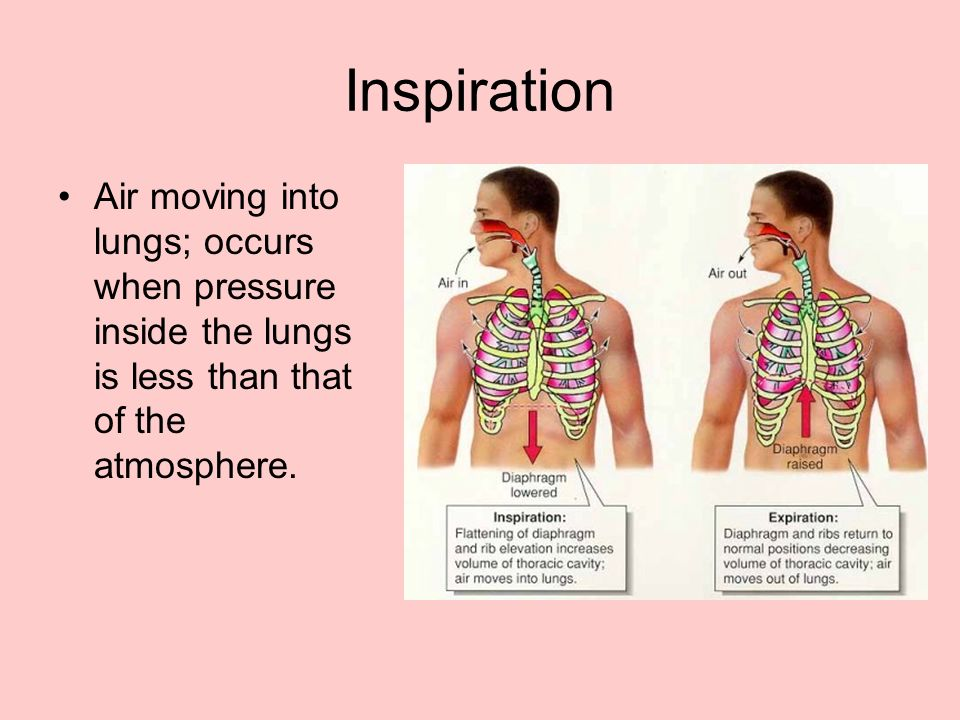 Inspiration Air moving into lungs; occurs when pressure inside the lungs is less than that of the atmosphere.