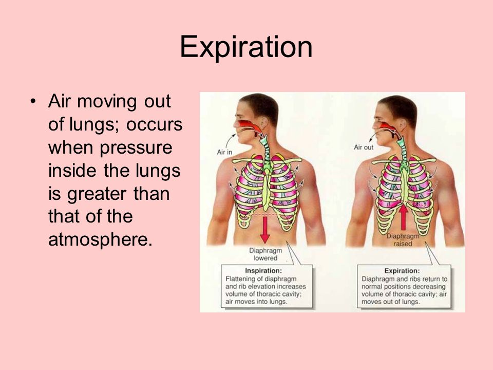 Expiration Air moving out of lungs; occurs when pressure inside the lungs is greater than that of the atmosphere.