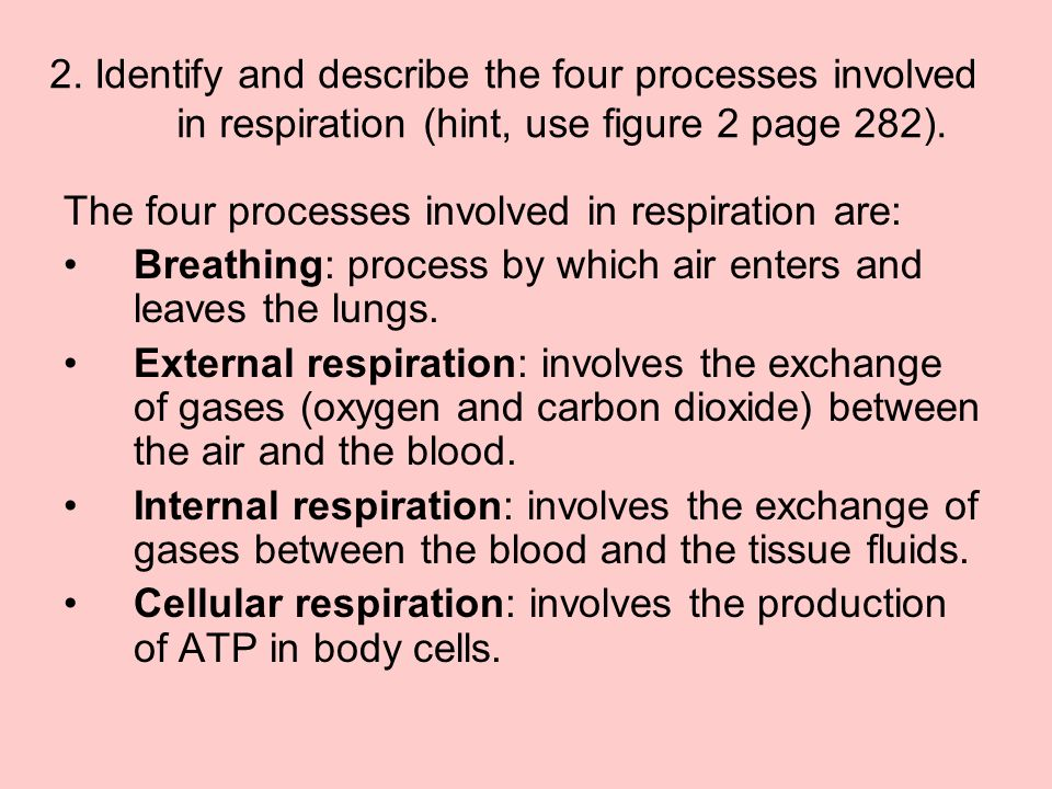 2. Identify and describe the four processes involved in respiration (hint, use figure 2 page 282).
