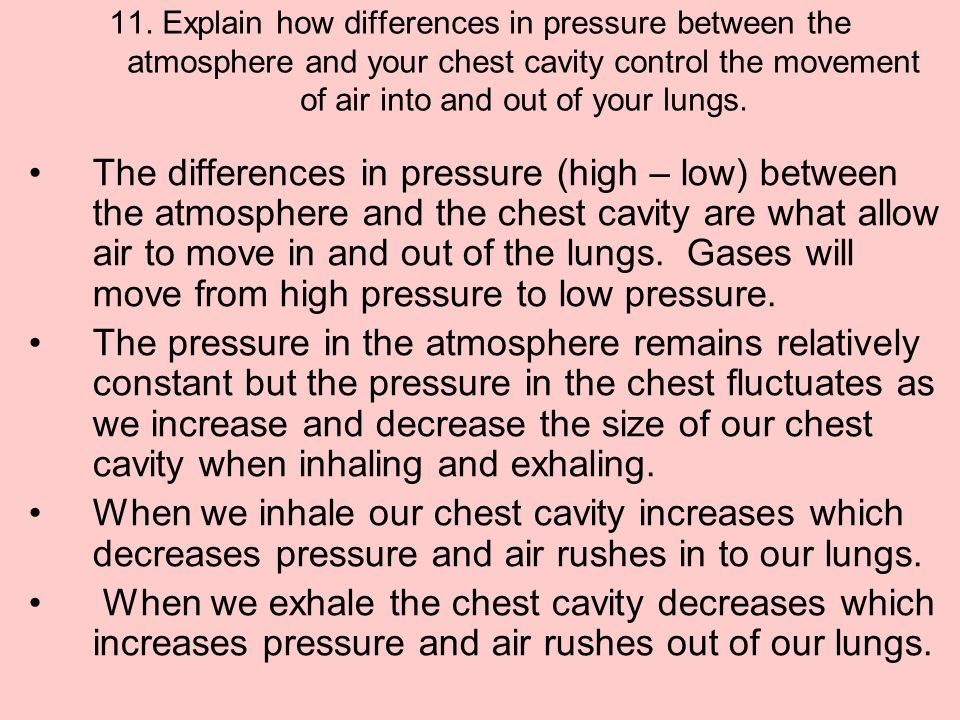 11. Explain how differences in pressure between the atmosphere and your chest cavity control the movement of air into and out of your lungs.