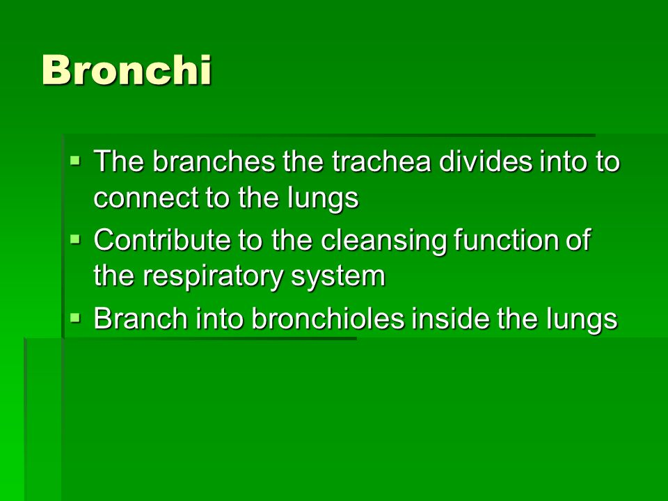 Bronchi The branches the trachea divides into to connect to the lungs
