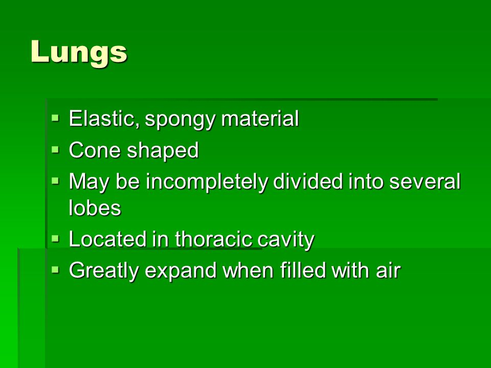 Lungs Elastic, spongy material Cone shaped