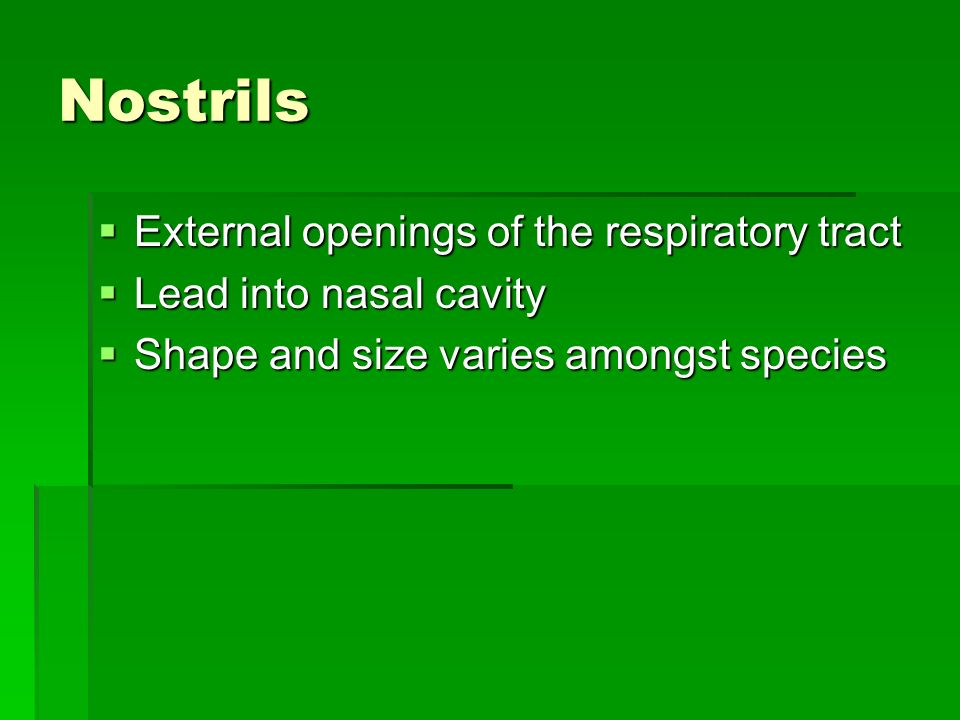 Nostrils External openings of the respiratory tract