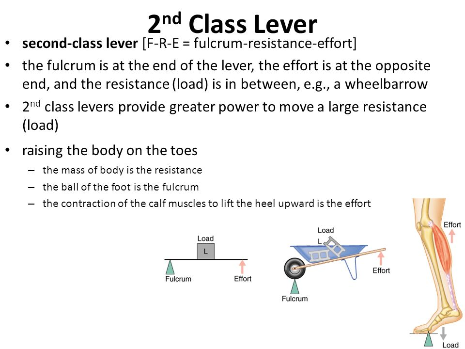 Levers It Was Aristotle That Said Give Me A Lever And A Fulcrum