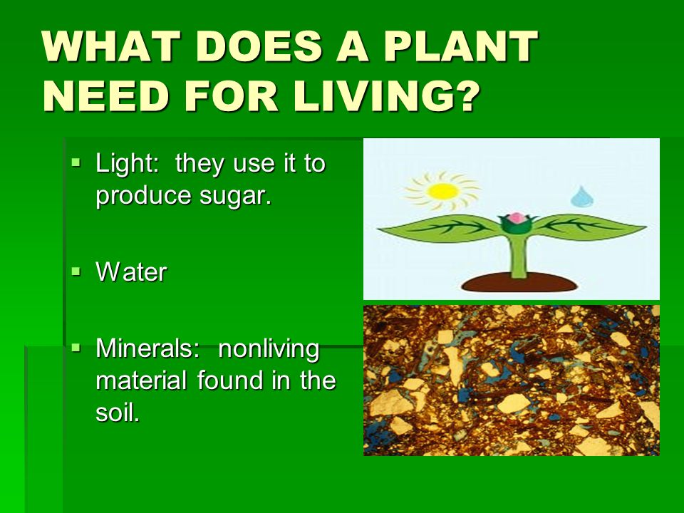 WHAT DOES A PLANT NEED FOR LIVING