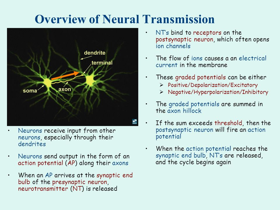 Overview of Neural Transmission