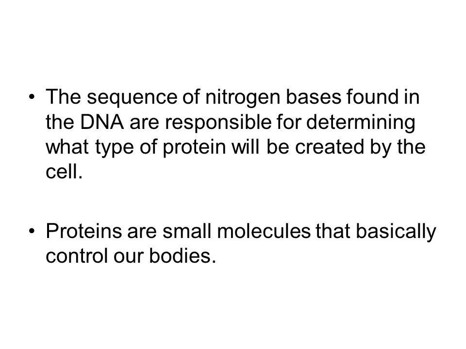 The sequence of nitrogen bases found in the DNA are responsible for determining what type of protein will be created by the cell.