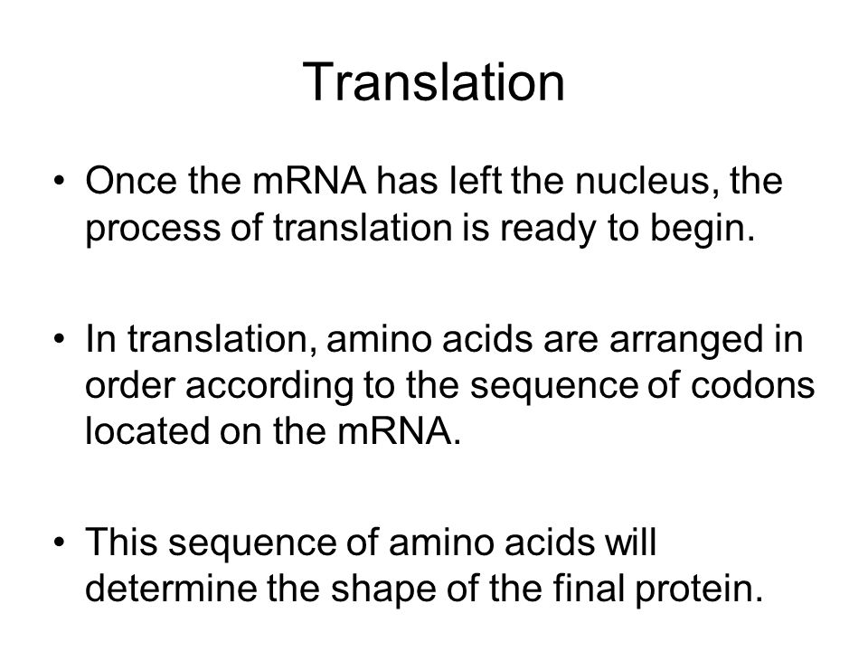Translation Once the mRNA has left the nucleus, the process of translation is ready to begin.
