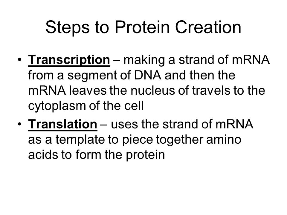 Steps to Protein Creation