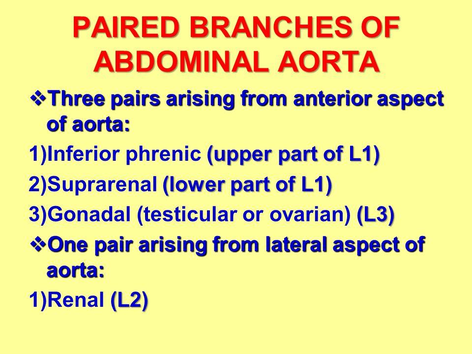 Abdominal Aorta Inferior Vena Cava Dr Ahmed Fathalla Ibrahim