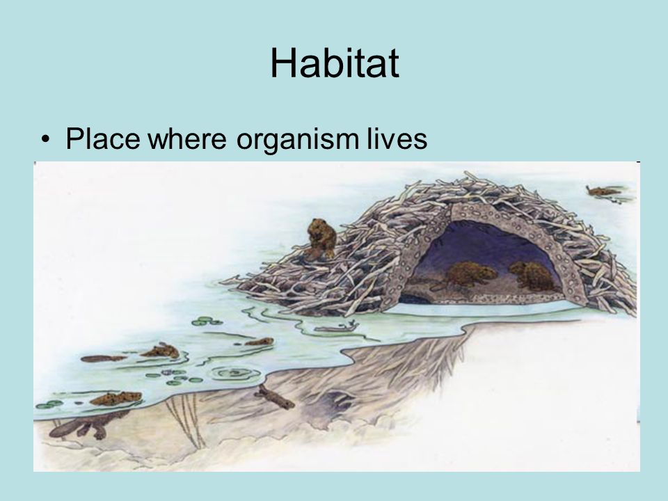 Habitat Place where organism lives