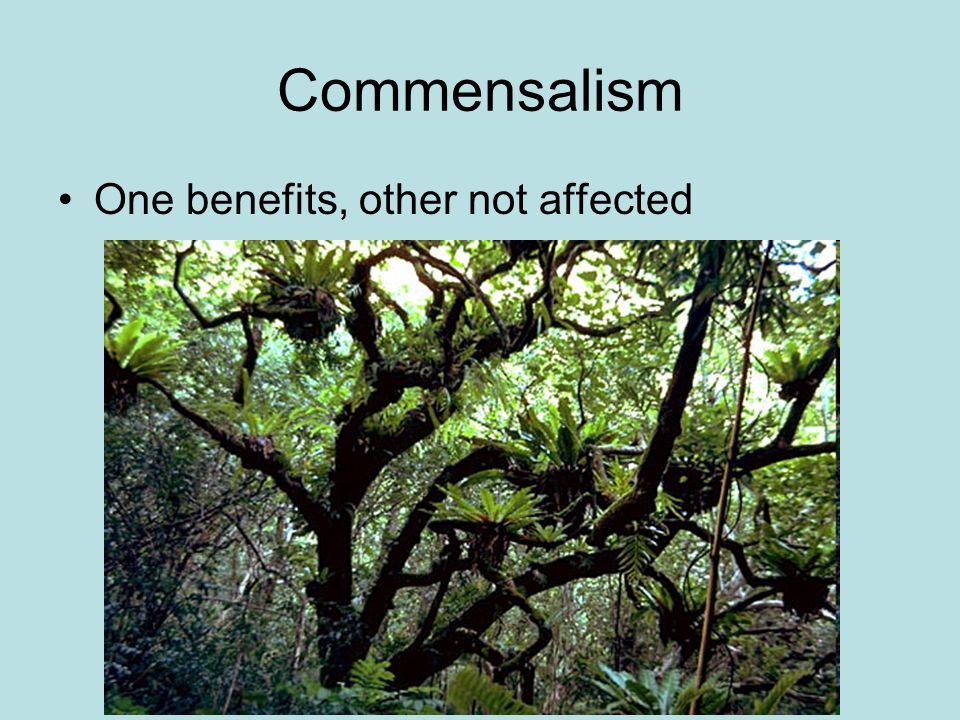 Commensalism One benefits, other not affected