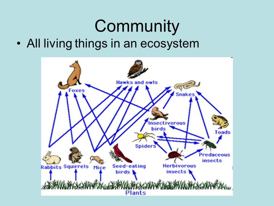 Community All living things in an ecosystem
