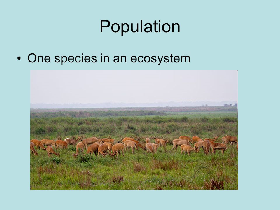 Population One species in an ecosystem