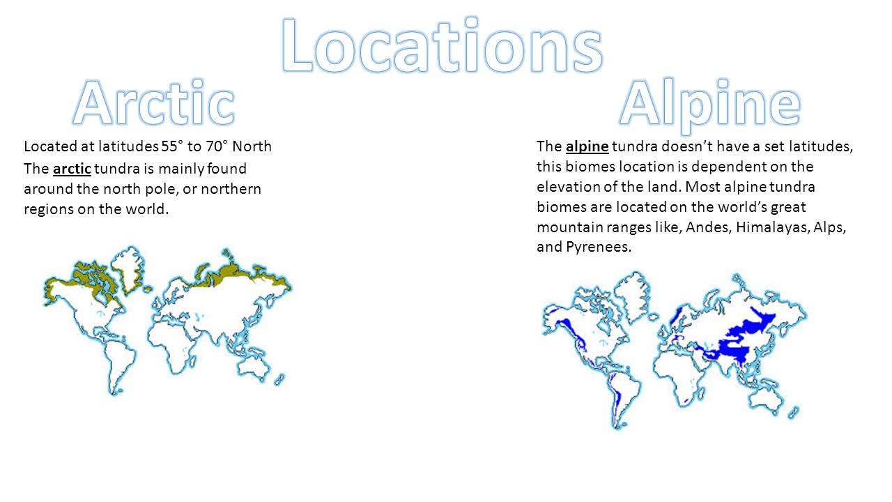 Tundra (Arctic and Alpine) - ppt video online download