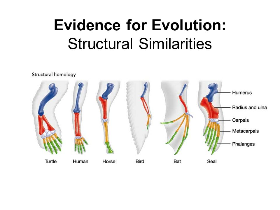 Anatomy & Physiology I - Unit 4: Evolution and Natural Selection ...