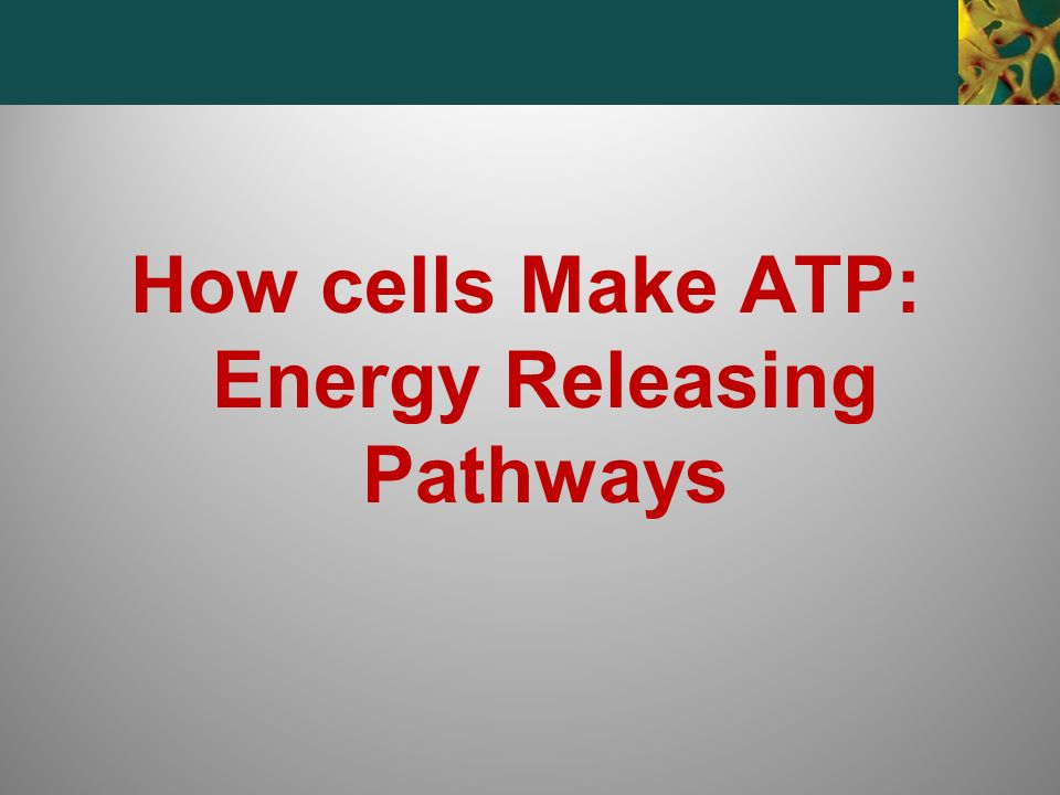 How cells Make ATP: Energy Releasing Pathways