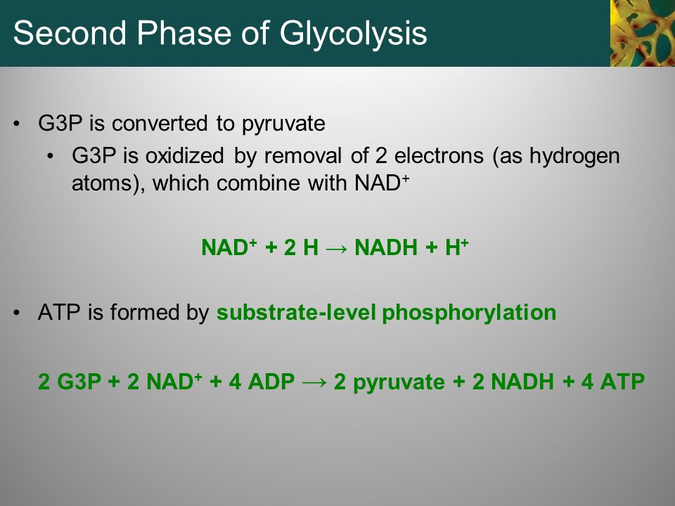 Second Phase of Glycolysis
