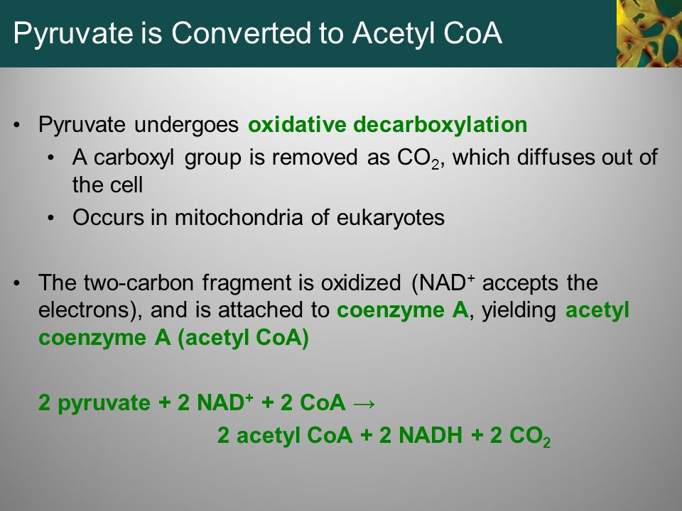 Pyruvate is Converted to Acetyl CoA