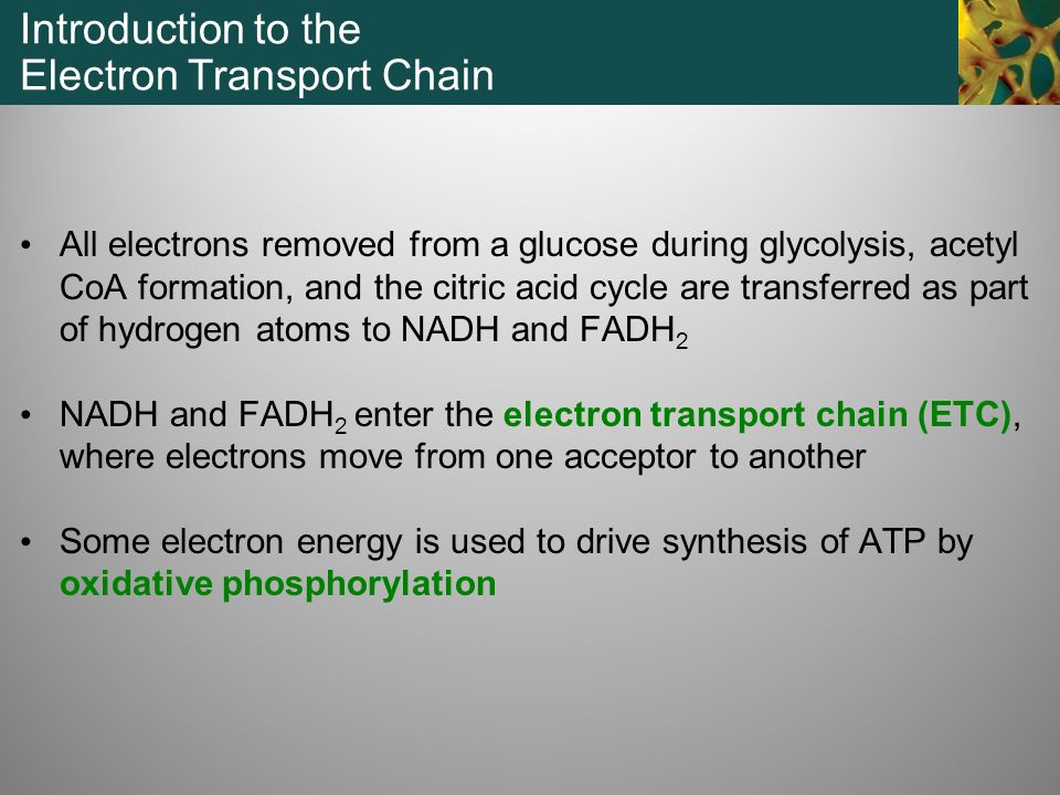 Introduction to the Electron Transport Chain