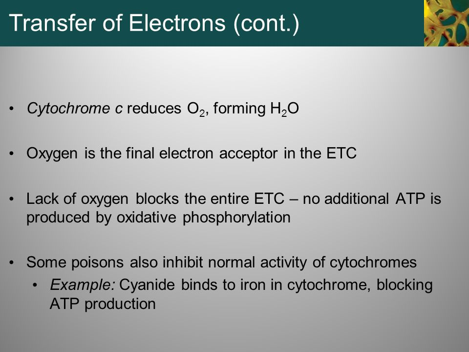 Transfer of Electrons (cont.)