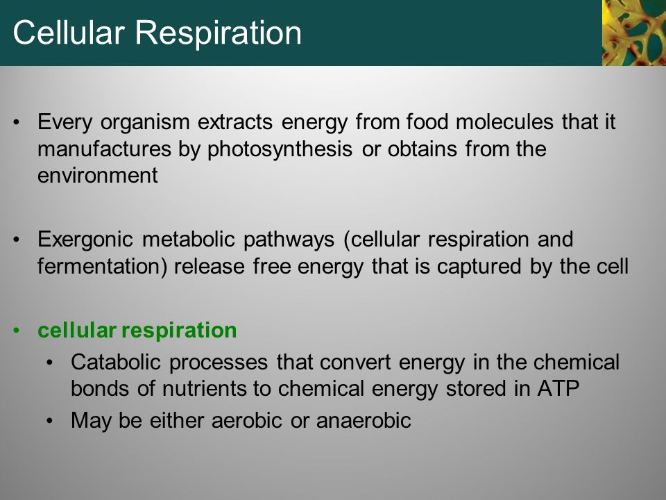Cellular Respiration Every organism extracts energy from food molecules that it manufactures by photosynthesis or obtains from the environment.