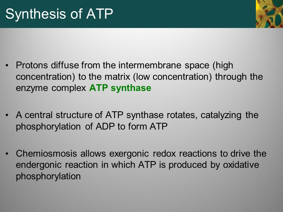 Synthesis of ATP