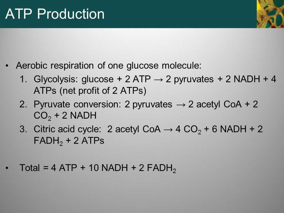 ATP Production Aerobic respiration of one glucose molecule:
