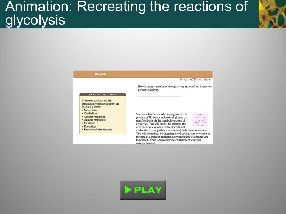 Animation: Recreating the reactions of glycolysis