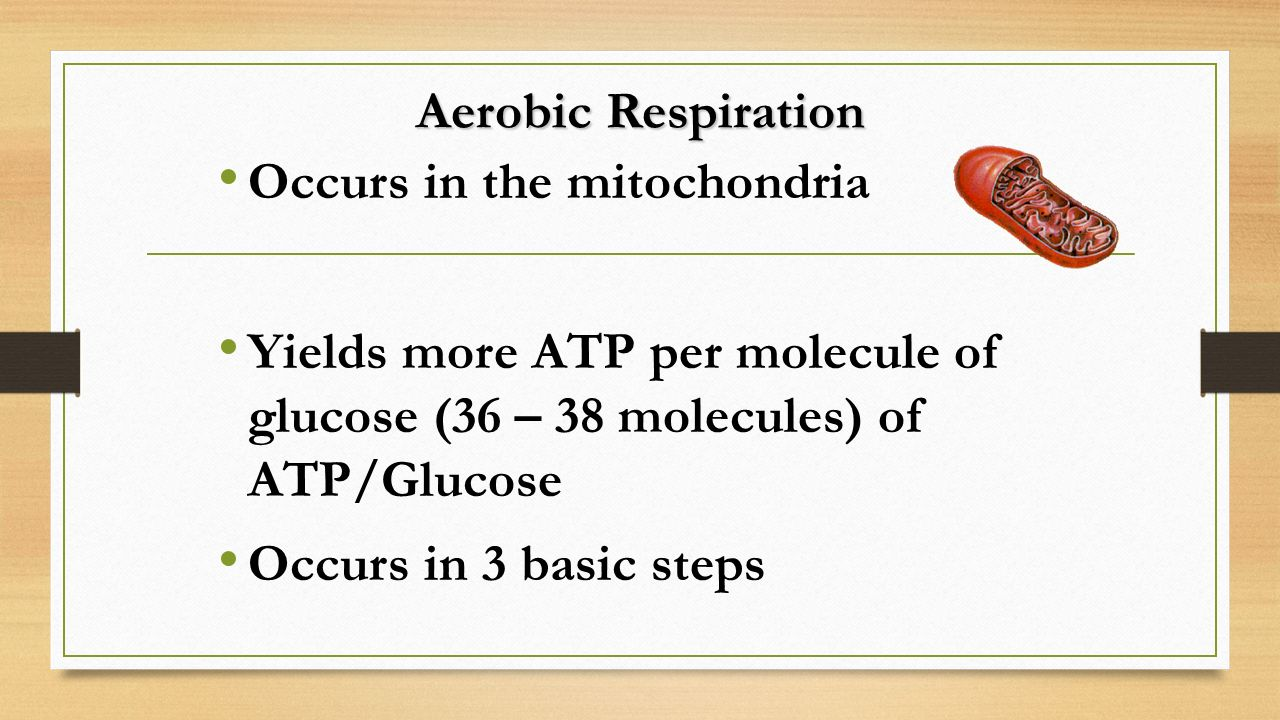 Aerobic Respiration Occurs in the mitochondria. Yields more ATP per molecule of glucose (36 – 38 molecules) of ATP/Glucose.