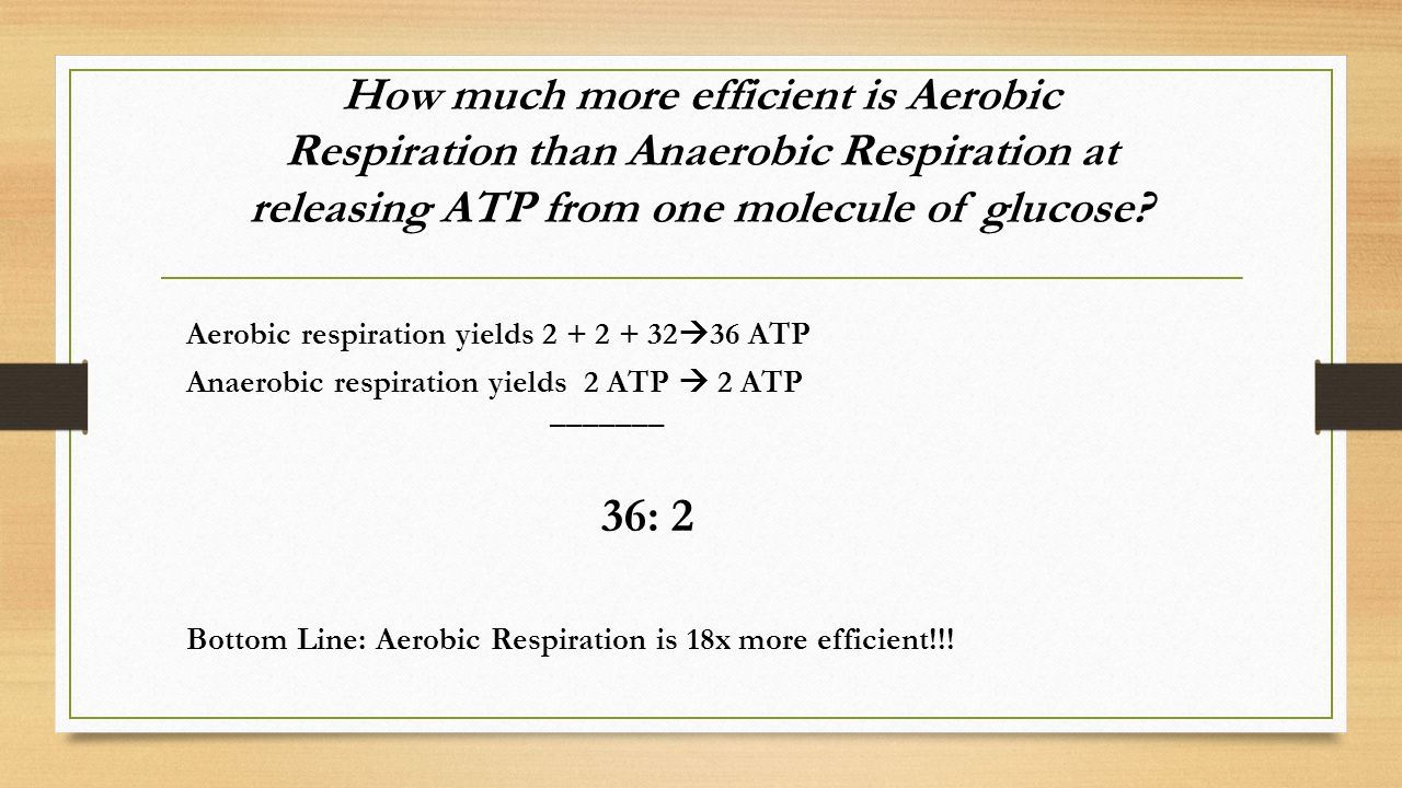 How much more efficient is Aerobic Respiration than Anaerobic Respiration at releasing ATP from one molecule of glucose