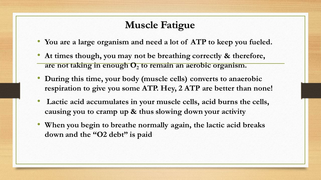 Muscle Fatigue You are a large organism and need a lot of ATP to keep you fueled.