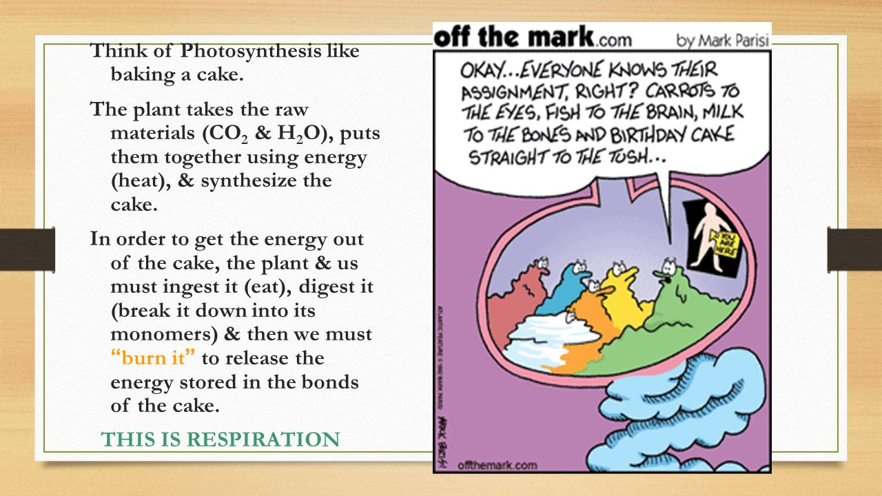 Think of Photosynthesis like baking a cake.