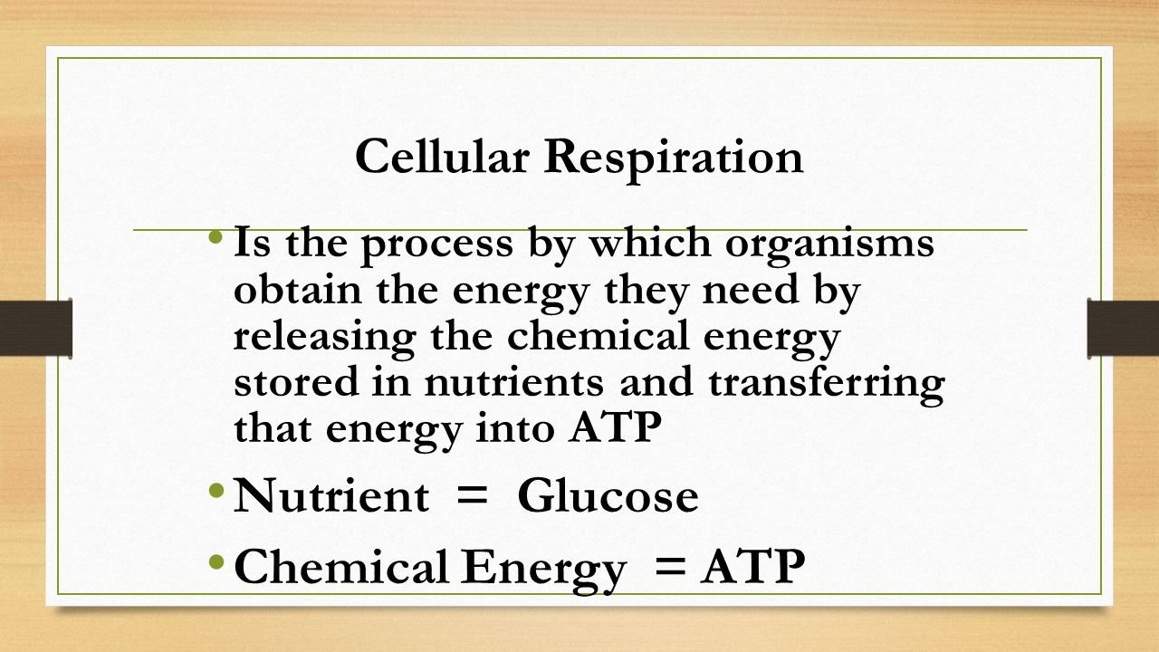 Cellular Respiration Nutrient = Glucose Chemical Energy = ATP