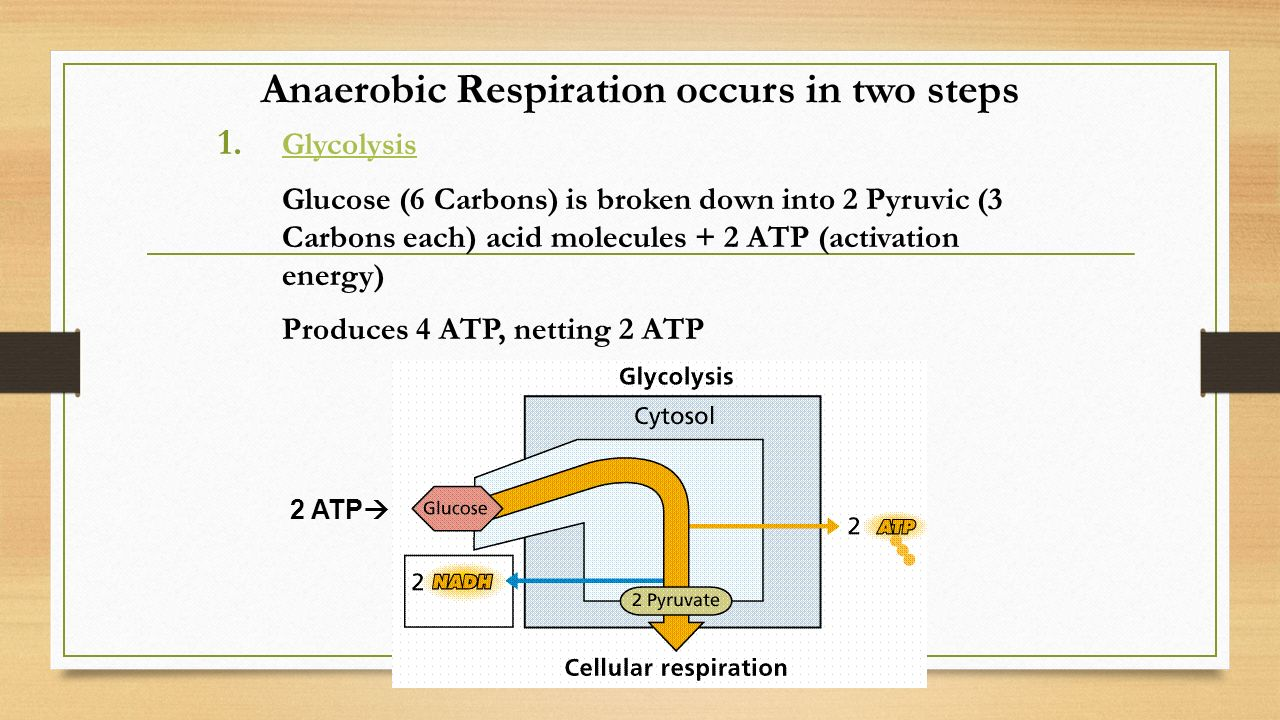 Anaerobic Respiration occurs in two steps