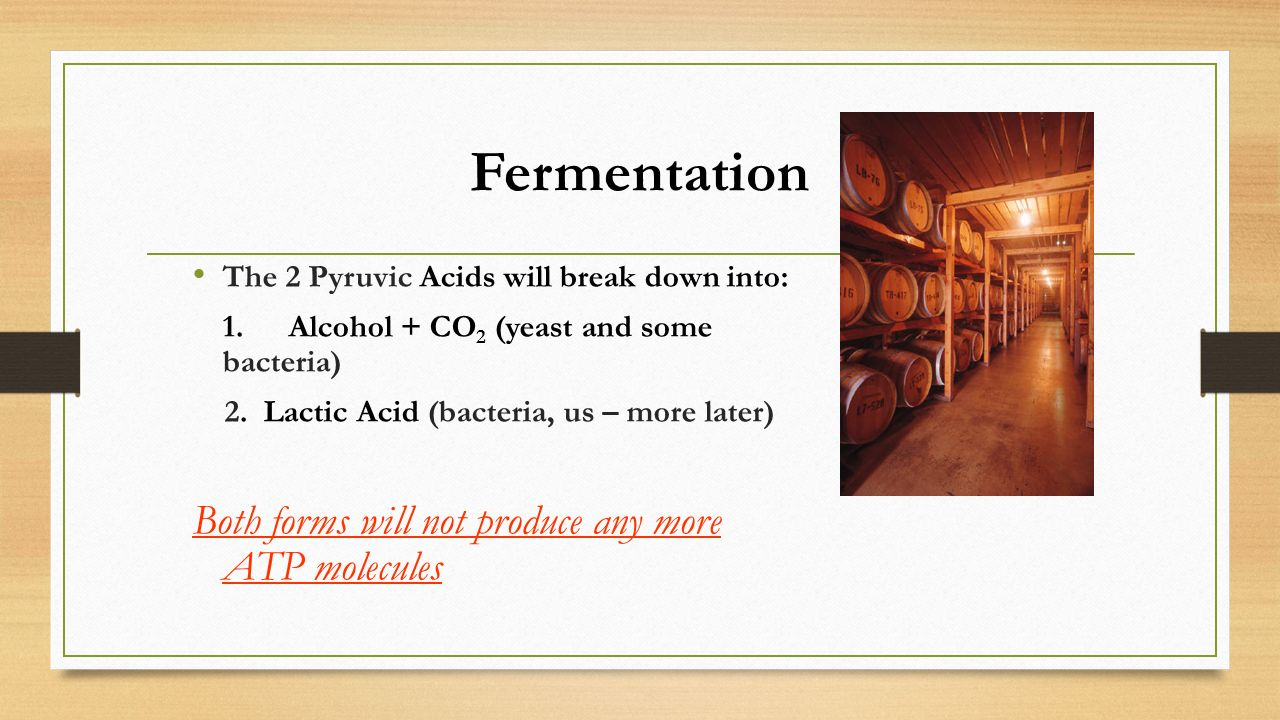Fermentation Both forms will not produce any more ATP molecules