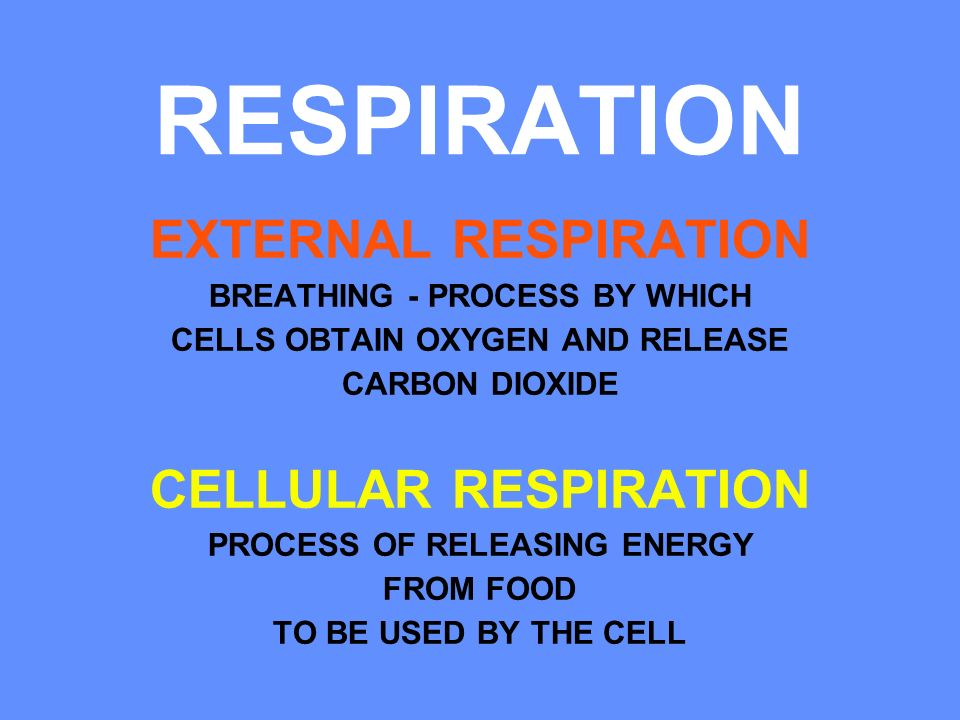RESPIRATION EXTERNAL RESPIRATION CELLULAR RESPIRATION