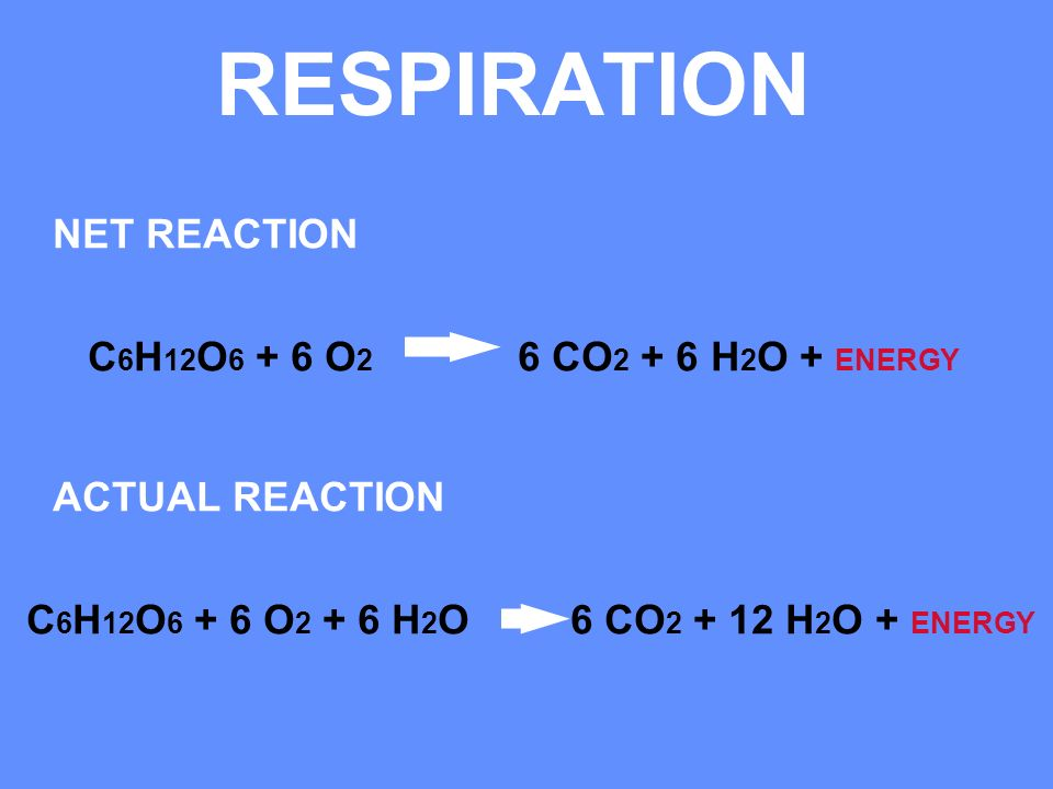 RESPIRATION NET REACTION C6H12O6 + 6 O2 6 CO2 + 6 H2O + ENERGY