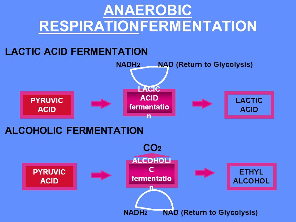 ANAEROBIC RESPIRATIONFERMENTATION