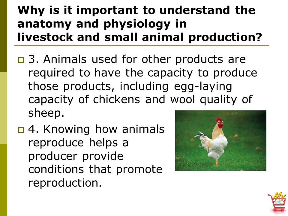 Animal, Plant & Soil Science - ppt video online download