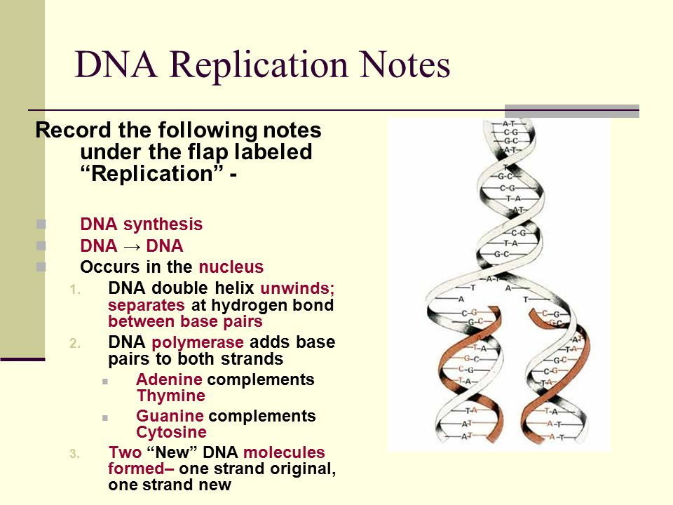 Daily TAKS Connection: Replication, Transcription