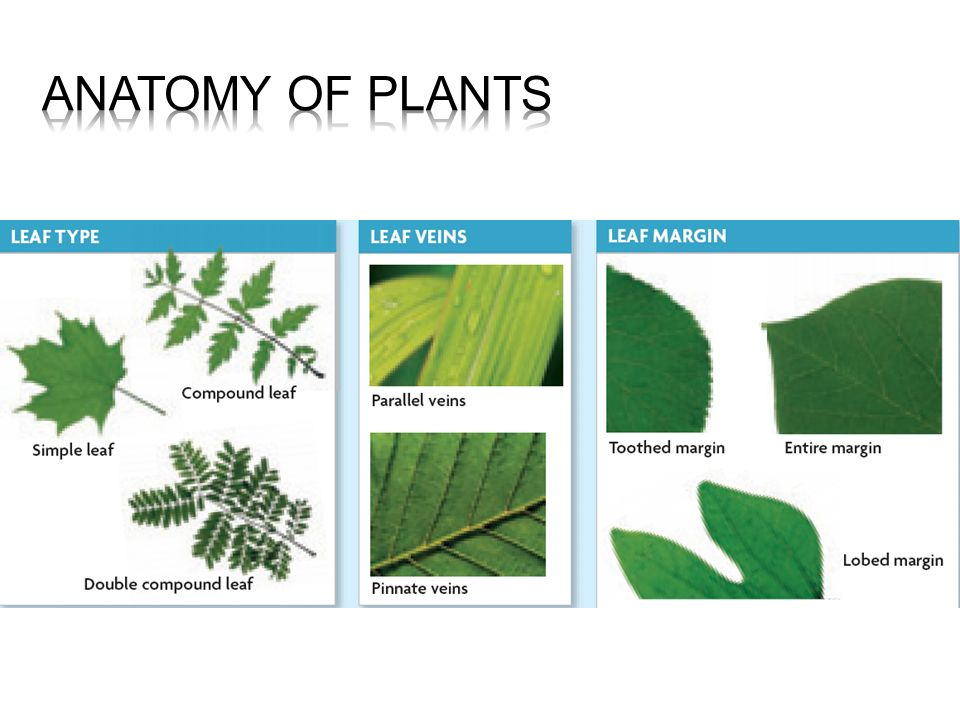 Evolution Of Plants Land Plants Evolved From Green Algae Ppt Video