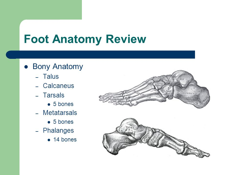 Foot and Ankle Seminar Jim Clover, MED, ATC. - ppt video online download