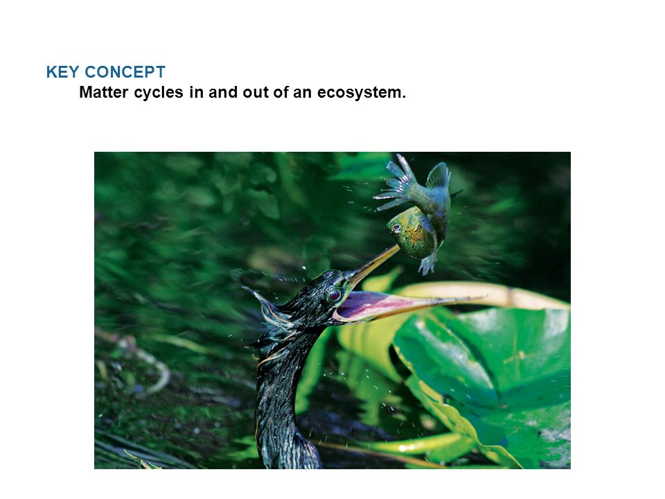 KEY CONCEPT Matter cycles in and out of an ecosystem.