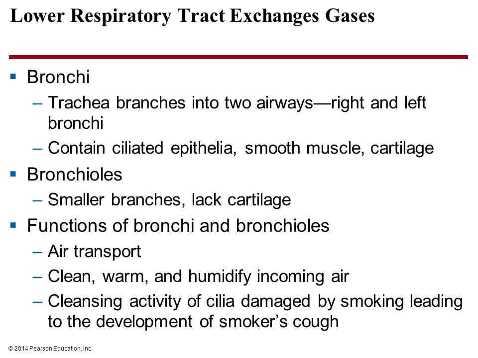The Respiratory System Exchange Of Gases Ppt Video Online Download
