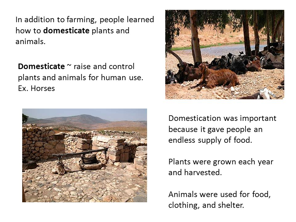 animals used for food and clothing