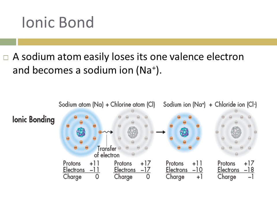 Ionic Bond A sodium atom easily loses its one valence electron and becomes a sodium ion (Na+).