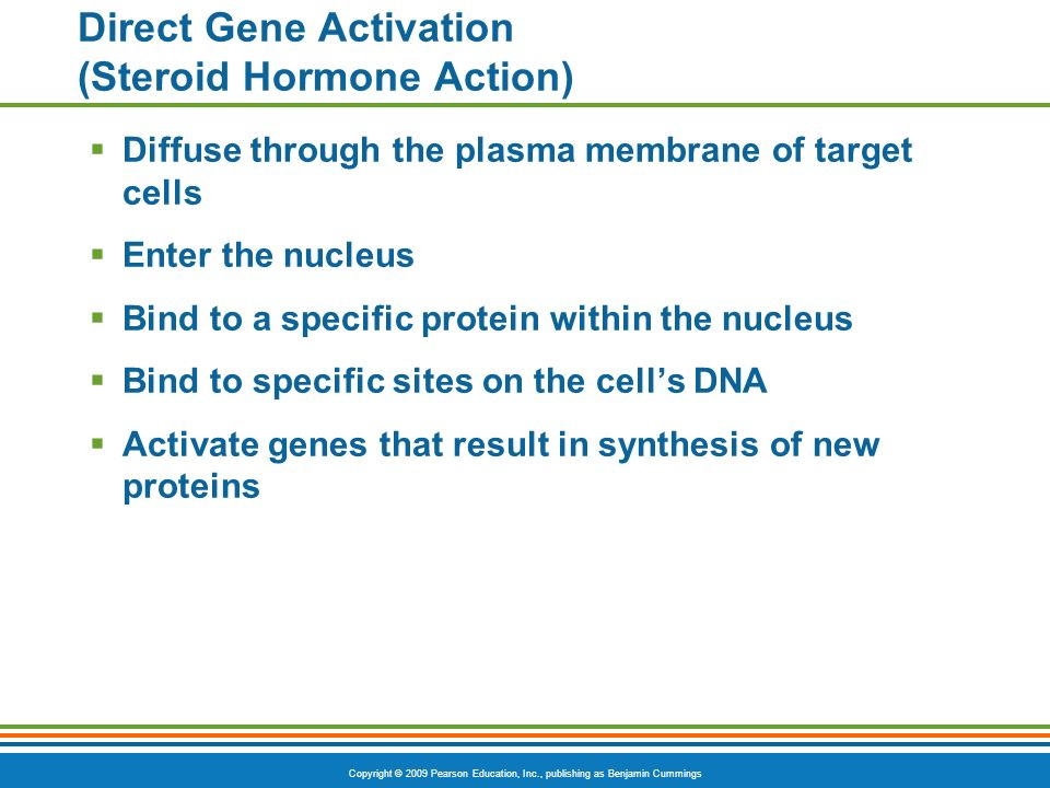 Direct Gene Activation (Steroid Hormone Action)